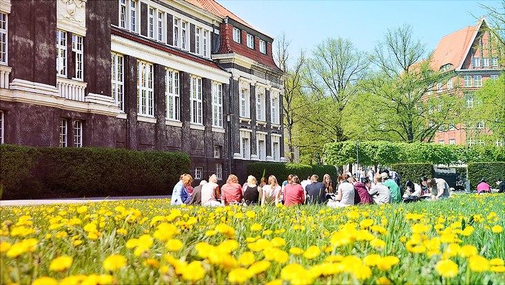 Löwenzahnwiese am Hauptgebäude