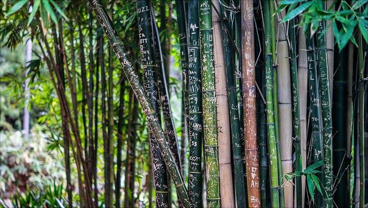 in Bambus eingeritzte Schrift