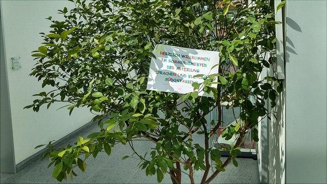 Baum im Gang des AAI mit beschriebenem Zettel