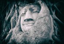 Bild Buddhastatue in Baum