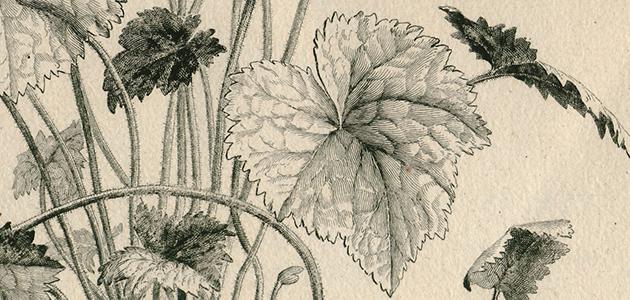 Pflanzengrafik