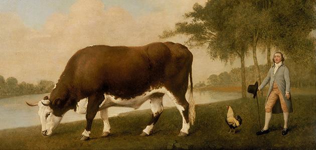 Lincolnshire Ox