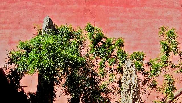 Rote Wand mit Pflanze