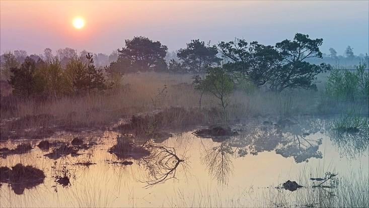 Ein Bild vom Moor